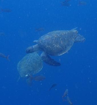 turtles everywhere