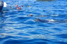 Spot the whale shark lips